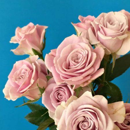 rosas-semillasalvaje