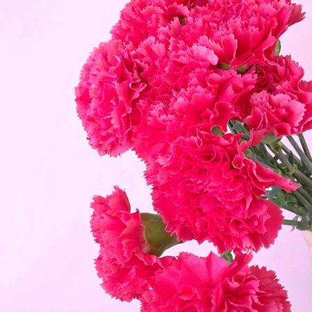 floristeria-SemillaSalvaje-clavel-2