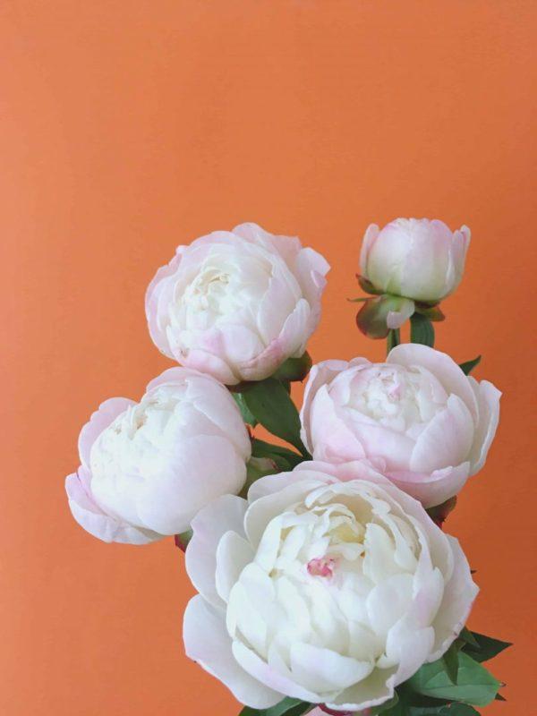 Flor de peonía