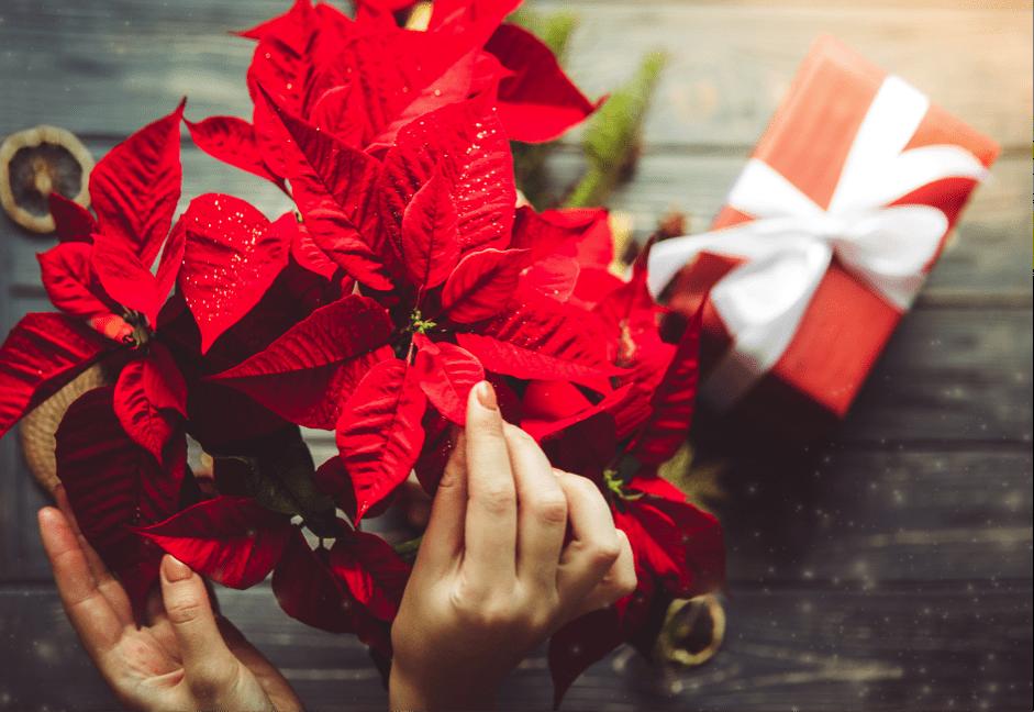 Navidad: decoración floral, iluminación y ahorro energético > 16/11/2020